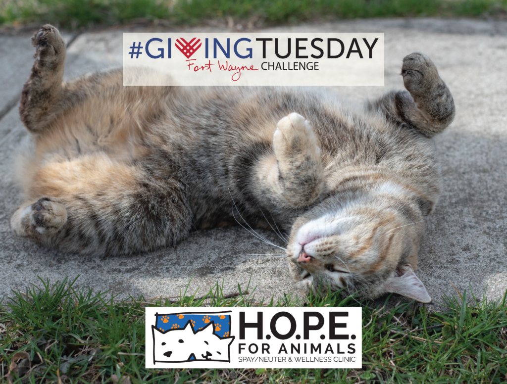 Hope for Animals - Giving Tuesday Recipient 2017